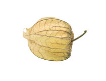 Physalis för ny frukt Fotografering för Bildbyråer