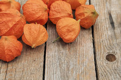Physalis flowers Stock Image