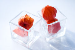 Physalis flowers in two glasses Royalty Free Stock Images