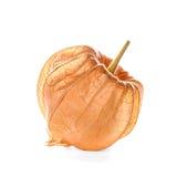 Physalis, fresh fruits Stock Photos