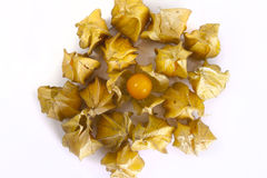 Physalis front Stock Image