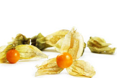 Physalis in front of other Royalty Free Stock Image