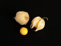 Physalis-Frucht Stockfotografie