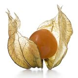 Physalis, Frucht mit papery Hülsen Lizenzfreies Stockbild