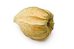 Physalis fruit Stock Photography