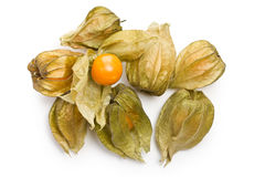 Physalis fruit Stock Images