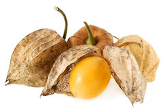 Free Physalis Fruit Royalty Free Stock Photography - 3374807