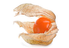 Ripe Physalis Royalty Free Stock Photography
