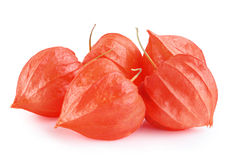 Physalis fruit Gooseberry Stock Photography