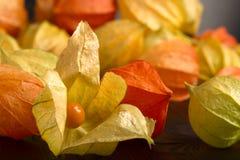 Physalis - fruit with husk Stock Photography