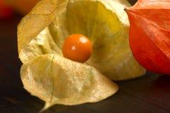 Physalis - fruit with husk Royalty Free Stock Photo