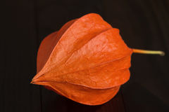 Physalis - fruit with husk Royalty Free Stock Images