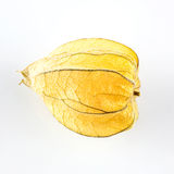 Physalis fruit husk Royalty Free Stock Photos