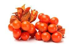 Physalis Royalty Free Stock Photography