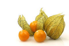 Physalis fruit (Physalis peruviana) Stock Image