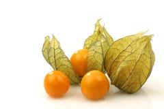 Physalis fruit (Physalis peruviana) Stock Image