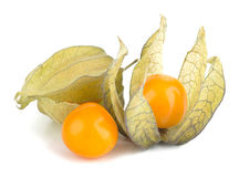 Physalis fruit Stock Image