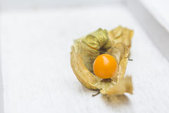 Physalis fruit Stock Photography