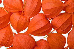 Physalis. Physalis fruits isolated on a white background. Close-up Stock Images