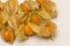 Physalis fruits isolated on a white background Stock Image