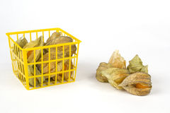 Physalis fruits in and out of a plastic basket Royalty Free Stock Images