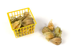 Physalis fruits in and out of a plastic basket Stock Photography