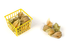 Physalis fruits in and out of a plastic basket on white Royalty Free Stock Photography