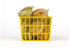 Physalis fruits in plastic basket and isolated Royalty Free Stock Images