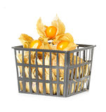 Physalis fruits in plastic basket Stock Photography