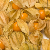 Physalis fruits  on a white background Royalty Free Stock Photos