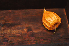 Physalis on a gray background Royalty Free Stock Photo