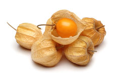 Physalis Group. Physalis; object on a white background royalty free stock photos