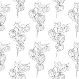 Physalis  illustration isolated on white background. Seamless pattern. Floral ornament design texture for paper, package tea Royalty Free Stock Image