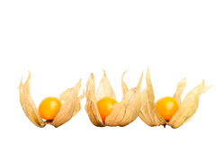 Physalis isolated on white Royalty Free Stock Photography