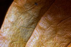 Physalis, macro, orange, detail, streaks, plant, shine, glare, textured, nature stock photos
