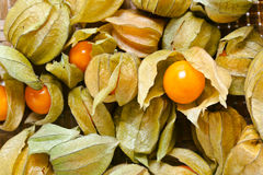Physalis. Macro shot , focus on a center royalty free stock images