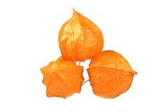 Physalis maturo della frutta isolato Fotografia Stock