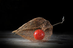 Physalis on old wood, black  background Royalty Free Stock Photography