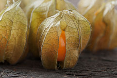 Physalis. Physalis on an old wooden background stock photography