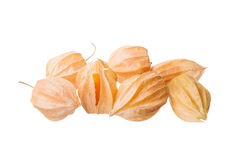 Physalis Stock Photography