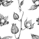 Physalis pattern Royalty Free Stock Images