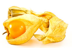 Physalis peruviana Stock Images