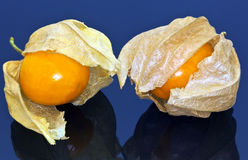 Physalis peruviana (Cape Gooseberry) on black background. Stock Photography