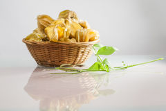Physalis peruviana fruits in a basket and green plant Royalty Free Stock Photo