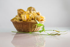 Physalis peruviana fruits in a basket and green plant Royalty Free Stock Images