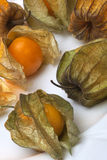 Physalis - Chinese Lantern - Cape Goosebury Stock Photography
