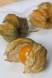 Physalis - Chinese Lantern Royalty Free Stock Photography