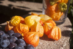 Physalis and plum. Closeup on Physalis near plum, in a garden Royalty Free Stock Image
