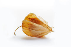 Physalis  Stock Image