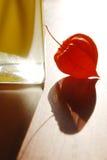 Physalis rosso e vaso giallo Fotografie Stock Libere da Diritti